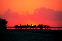 Camel riders in Nad Al Sheba at sunset, UAE