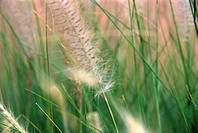 Blade of grass in the meadow (thumbnail)