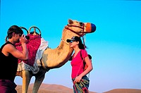 Western tourists photographing a camel in the desert near Hatta, United Arab Emirates