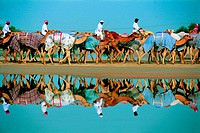 Camels and their riders in Nad Al Sheba, UAE