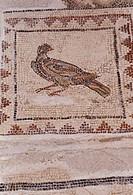 Italica bei Sevilla/ Amphitheater, errichtet unter Hadrian, 117-38, Fußbodenmosaik