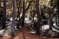 La Granja de San Ildefonso/ Waldweg im Park
