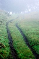 Tire tracks through foggy countryside.