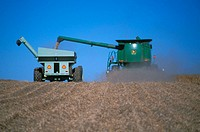 Harvesting milo with combine and grain cart. Nebraska. USA