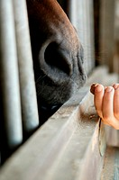 Person feeding a horse (thumbnail)