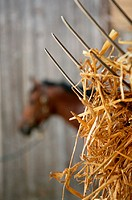 Hay on a pitchfork in front of a horse (thumbnail)