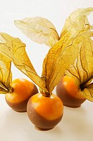 Chocolate-coated physalis