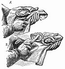 Opening oysters (illustration) (thumbnail)