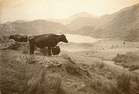 Llyn Gwynant & Moel Hebog, 1914. Photograph by John Cimon Warburg (1867 -1931).  Warburg was able to devote his time wholeheartedly to photography bec...