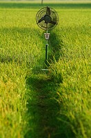 Fan, paddy field, early morning, Tamil Nadu, India