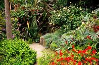 Path in San Francisco Botanical Garden, San Francisco. California, USA