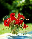 Small bunch of poppies in glass vase