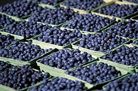 Blueberries in cardboard punnets (filling the picture)