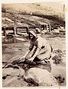 Photograph by Frank Meadow Sutcliffe (1853-1941) of a woman kneeling on rocks and using a scrubbing brush on what could be seaweed. Seaweed has long b...