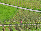 agriculture, canton, hubby, jog, jogging, model, mountain, no, release, shoots, slat, sports, Switzerland, Europe, v