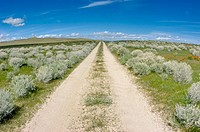 Dirt road through sagebrush, Antelope Valley, California