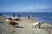 albania, scutari, goats and sheep are pasturing