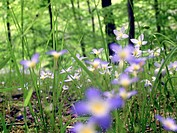 A view from the forest floor in spring