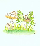 Mushrooms and fern