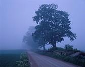 Gravel road in mist, Småland Sweden