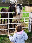 Little girl looking at two horses. UK