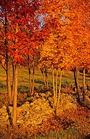 USA, Vermont, Green Mountains, Indian Summer