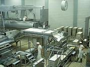 Soft cheese production: production hall (with workers and equipment) in which the broken cheese mass is filled into molds.