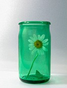 Daisy in green glass jar