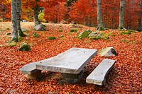 Picnic area in beechwood. Pyrenees Mountains region, Alta Ribagor&#231;a. Catalonia, Spain