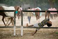 Delhi Racecourse. Child watching the excercising of racehorses. Central Delhi. Delhi. India.