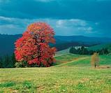 Autumn landscape, Slovakia