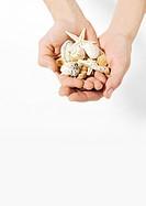 Hands holding seashells