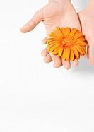 Hand holding flower head