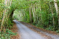 Lochside Trail at Dooley Road. Saanich, British Columbia, 7 September 2005