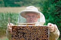Beekeeper cleans, feeds and inspects hives for health and condition of queen and her drones for honey in fields where they pollinate