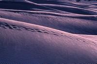 Sand dune, Thar Desert, India