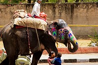 Young man riding an elephant, Jaipur, Rajasthan, India