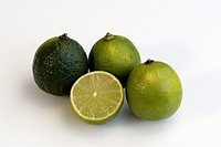 Lime, Citrus latifolia, Germany, fruit