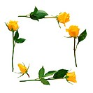 Yellow Rose Frame