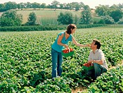 Couple in field, woman feeding man strawberry from punnet, side view