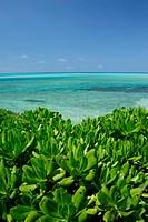 Japan, Okinawa Prefecture, Miyakojima, plants growing beside sea
