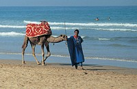 camel on the beach, agadir, morocco
