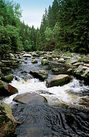 Bohemia, Color, Colour, Creek, Czechia, Europe, Czech Republic, Daytime, Exterior, Forest, Forests, Landscape, Landsca