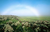 Fogbow