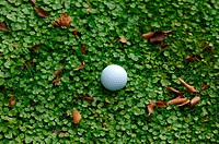 Close up of a golf ball in the rough