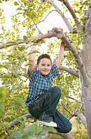 Boy climbing an apple tree (thumbnail)