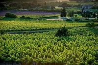 Vineyards in Luberon, Vaucluse, Provence, France