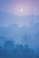 FOREST/MOUNTAIN LANDSCAPE