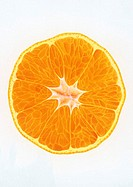Illustration of a Cross Section of a Mandarin Orange