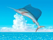 Illustration of a Sailfish